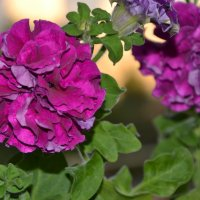 цветы на балконе :: Алексей Корзников