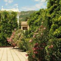 В Никитском ботаническом саду. :: sav-al-v Савченко
