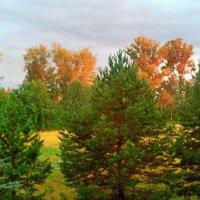 Осенним светом озарил закат деревья :: Николай Масляев