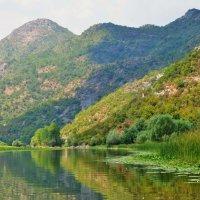 Скадарское озеро-Черногория :: Людмила