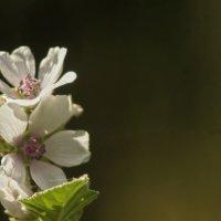 Цветок :: Валерий