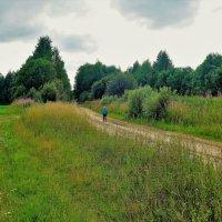 Дорога в лес на Гришкина... :: Sergey Gordoff