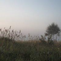 Туман :: ирина лузгина