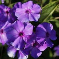 Городские цветы :: Liliya Kharlamova