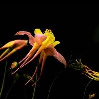 Цветочный вальс. :: Paparazzi