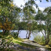 Г. Мурманск (тропинка к Семеновскому озеру). :: Анна Приходько