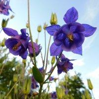 Цветы :: Анастасия Рысь