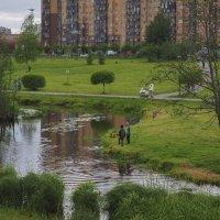 Река Оккервиль извилиста и мелководна, богата утками, но рыбою бедна... :: Юрий Велицкий