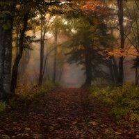 Запах прелой листвы .. :: Влад Соколовский