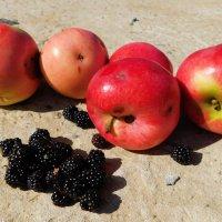 Ежевика, яблоки и паучок :: Анастасия Рысь