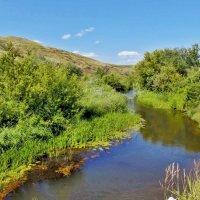 Степная речка летом :: Наталья Ильина