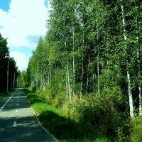 велосипедная дорожка :: Владимир