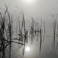 В тумане :: Валерий К.