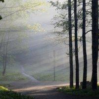 В утреннем парке.......... :: Юрий Цыплятников