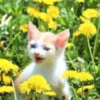 Котяка улыбака :: Ветер Странствий.орг
