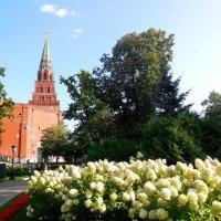 Москва. Кремль :: Надежда