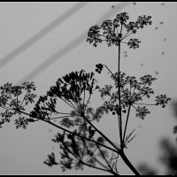 Графика лета :: san05 -  Александр Савицкий