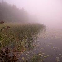 Полет в осень :: liudmila drake