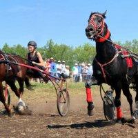 День Флора и Лавра - покровителей лошадей :: Андрей Заломленков