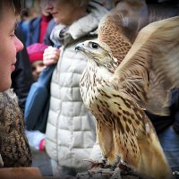 преданная птица :: Олег Лукьянов