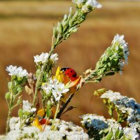 Много лета и цветов :: Валентина Пирогова