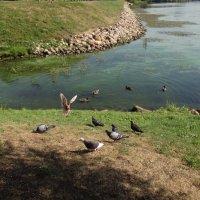 птицы на реке :: Валентина. .