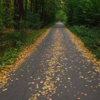 Чуть помедленнее, кони, чуть помедленнее! ...  (только 2 сентября) :: Андрей Лукьянов