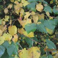 Осень :: Smit Maikl