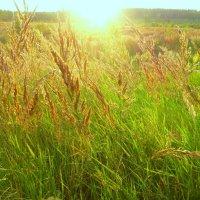 Уходит солнце за лесок... :: Raduzka (Надежда Веркина)