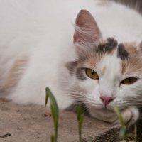 Маленькая кошечка с грустными глазками ... :: Ольга Винницкая (Olenka)