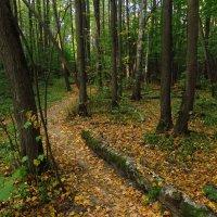 Осень, которую уже не надо искать :: Андрей Лукьянов