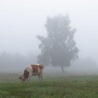Туман :: Юрий Вахненко