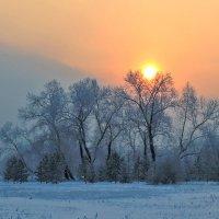 Морозное солнце в седых тополях :: Екатерина Торганская