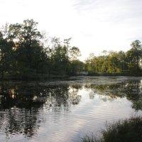 Средний Ламский пруд :: Наталья Герасимова