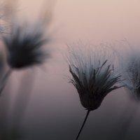 цветы2 :: Геннадий Свистов