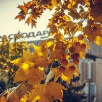Нужны ли осени слова? :: Krasnodar Pictures