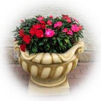 ваза с цветами IMG_9210-16 :: Олег Петрушин