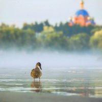 Вышла утка из тумана... :: Оксана Ильченко