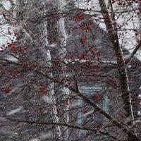 Снегопад :: Светлана Рябова-Шатунова