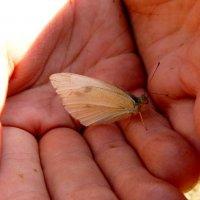 прирученные бабочки 1 :: Александр Прокудин