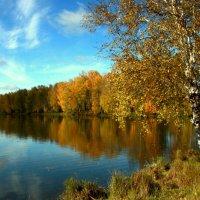 Осенних дней краса и волшебство... :: Нэля Лысенко