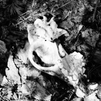Тёмная сторона леса :: Елена Елена