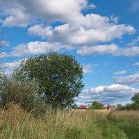 Август в деревне :: lady v.ekaterina