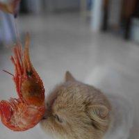 Знакомство с морепродуктами :: Наталья Rosenwasser