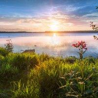 Утреннее солнце :: Юлия Батурина