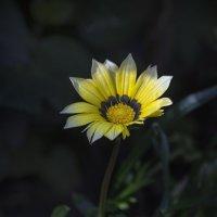 Цветка теплый свет :: gribushko грибушко Николай