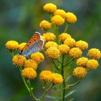 Маленькая бабочка. :: Владимир M