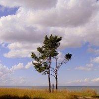 На семи ветрах. :: Мила Бовкун