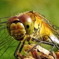 Улыбка стрекозы :: Va-Dim ...