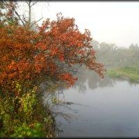 Ну вот и осень. :: victor leinonen